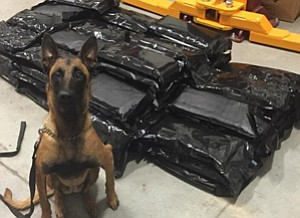 K-9 Gemma with the stash she sniffed out. Courtesy photo