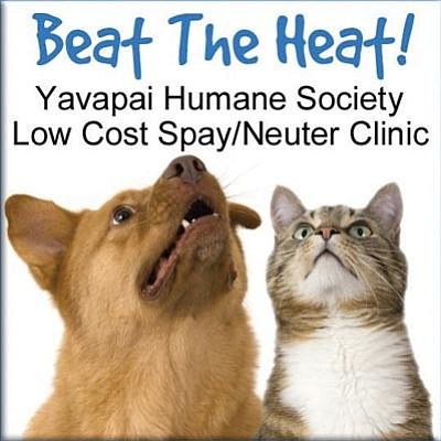 Courtesy photo<br>Beat the Heat to make sure your pet isn't contributing to the pet overpopulation crisis. Call 928-771-0547 to make your appointment today!