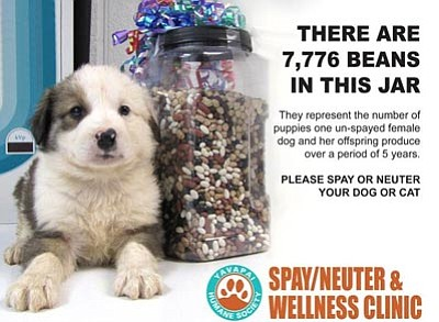 Courtesy photo<br>One unspayed female dog and her offspring can produce more than 7,776 puppies over a period of five years.