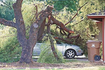 A vehicle on Clarendon and 44th Street is damaged from fallen tree limbs, Tuesday, Sept. 1, 2015, in Phoenix. Monsoon storms hit the Phoenix area Monday night and knocked out power to thousands, delayed air travel, and stranded motorists in flash floods and knocking down trees. (John Samora/The Arizona Republic via AP)