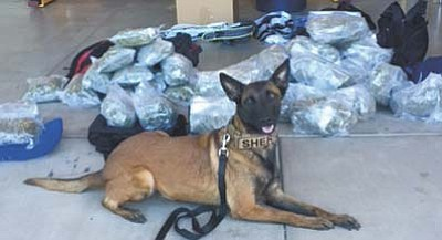 K9 Miley sits with the contraband marijuana found during a traffic stop on I-40 near Ash Fork Wednesday, Oct. 14. (Courtesy photos)
