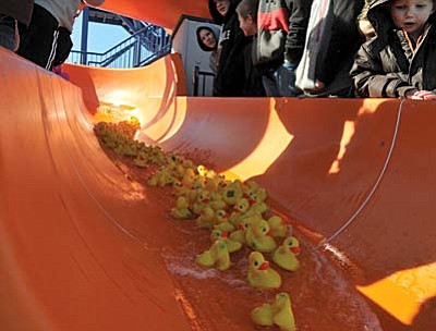 Matt Hinshaw/The Daily Courier<br>Rubber ducks fly down the Mountain Valley Splash pool slide during the annual duck race before the Polar Bear Splash in Prescott Valley Saturday morning.  One duck was picked from the pack to win a pair of Oakley sunglasses.