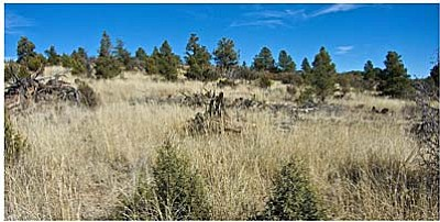 Gary Beverly/Courtesy photo<br>Juniper regrowth after thinning.
