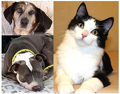 Tallulah the hound dog, Smokey the pit bull and Cow the tuxedo cat are three examples of the hundreds of animals who survived serious injuries or illnesses in 2015 thanks to YHS supporters.