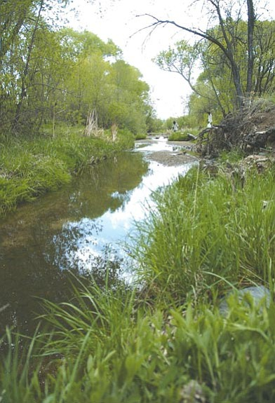 The Daily Courier/Nathaniel Kastelic The Arizona Department of Environmental Quality has given the Prescott Creeks Preservation Association almost $600,000 for conservation of Watson Woods and Granite Creek.