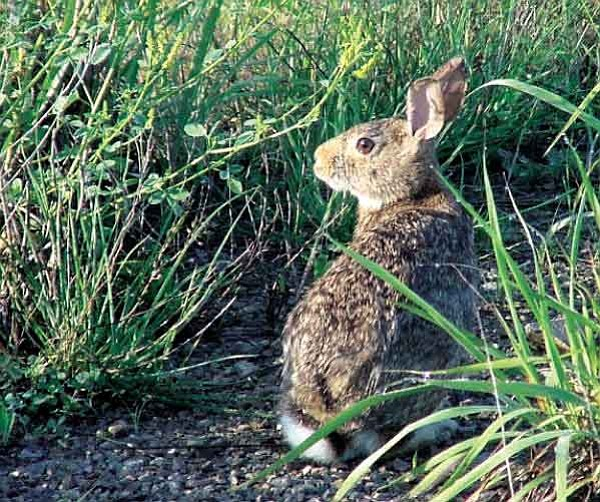 Courtesy <br> Blood meal will keep some pests such as rabbits out of the garden.