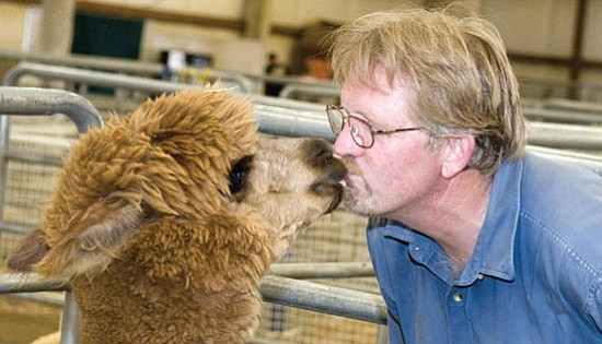 Les Stukenberg/The Daily Courier<p> Dusty Eiker gets up close with one of his alpacas, Mr. Sniffy, on day one of the Yavapai County Fair at the Coors Event Center in Prescott Valley.