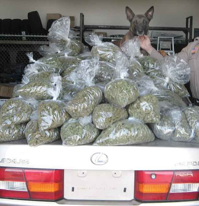YCSO K-9 Elliot sits atop a pile of bags of marijuana Deputy Dean Guthery took from a car near Seligman.  Courtesy