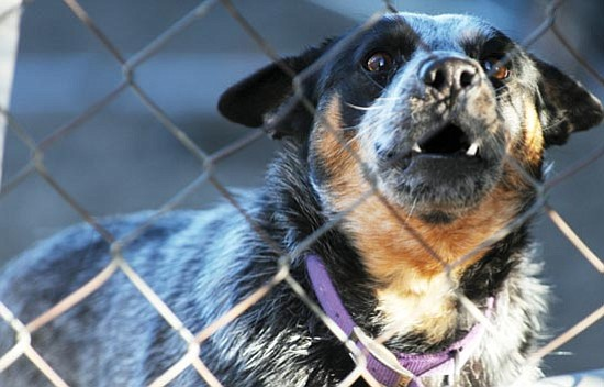 Pet owners have less confrontational ways to solve dog