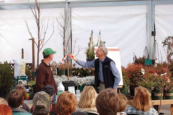 "Doug Cook/The Daily Courier<br> Harold Watters, right, shows growers how to properly prune a fruit tree during ""The Fruitful Gardener"" discussion Saturday morning at Watters Garden Center in Prescott, as Gerald Rogers looks on."