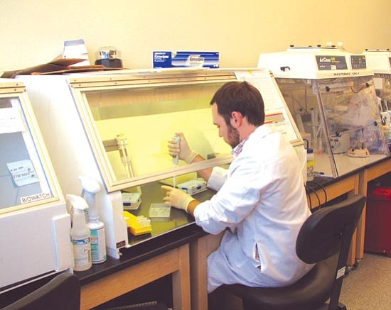 Arizona Department of Health Services/Courtesy photo<p> State technician Robert Nickla prepares clinical samples submitted for influenza testing at the Arizona State Laboratory in Phoenix.