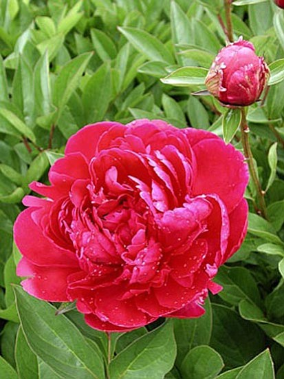 Ken Lain/Courtesy photo<p> Many flowers that add fragrance and beauty to the garden also are great as garnishes or in salads. Some can be coated with a light cornmeal batter and fried, while others can be stuffed or used in stir-fry dishes. Blossoms also can be added to beverages, used to make teas and wine, frozen in ice cubes, candied, and made into jellies and jams.