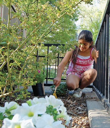 Bruce Colbert/The Daily Courier<p> Prescott Neighborhood Girl Scout Troop 479 planted petunias Monday at the Yavapai County Courthouse. Elena Flores, 9, and four of her troop members planted the purple and white flowers as a community project.