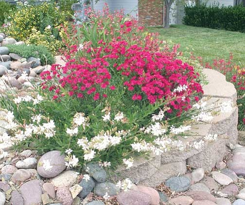 Ken Lain/Courtesy photo<br> Want hassle-free landscaping? Consider the Garden Guy's six cardinal principles.
