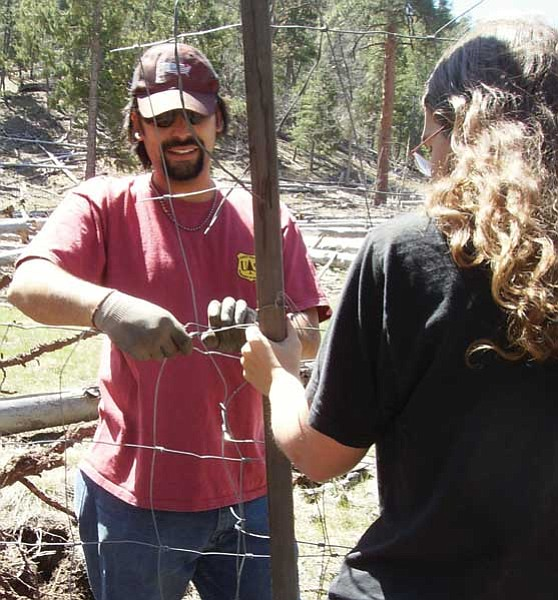 Kaibab National Forest/Courtesy photo<br> Recent Northern Arizona University graduate Mike French, who now works for the U.S. Forest Service, secures new wire fencing around an aspen stand.