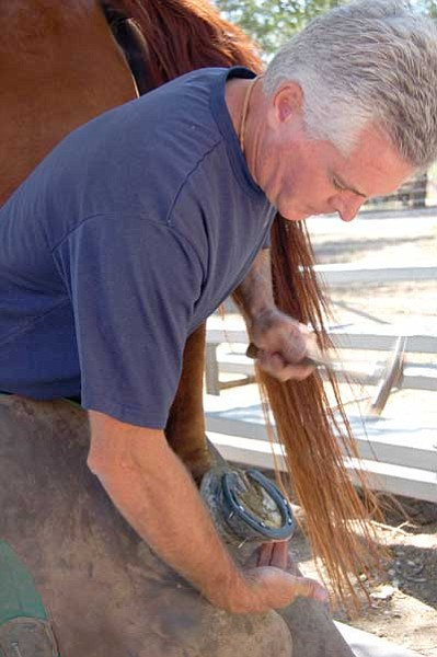 Jerry J. Herrmann/The Daily Courier<br> Chino Valley farrier Bob Earle shoes one of Greg Sturgis' horses at his business, Four Shoes, on Thursday. Earle will do free horseshoeing demonstrations Saturday during Territorial Days at Yavapai College's Chino Valley campus.
