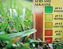 Courtesy photo<p> Regional soil ph levels differ greatly, so helpful gardening advice for one area may be harmful in another climate.