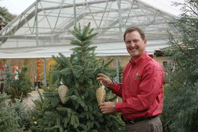 Courtesy photo Living trees like this Colorado Spruce make great Christmas trees for indoor use, and then can be planted outdoors after the new year.
