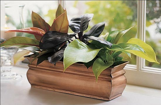Courtesy photo<p> Houseplants are natural air filters capable of removing up to 70 percent of indoor air pollutants. Environmental scientists recommend having one large plant per 100 square feet in our homes and workplaces.