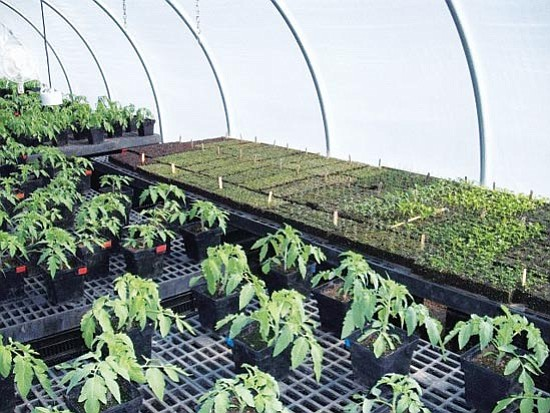 Ken Lain/Courtesy photo The main reason gardeners start seedlings indoors is to extend harvesting.