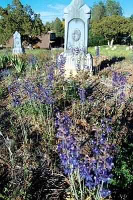 Joanna Dodder/The Daily Courier<br> Delphinium is prolific at Citizens Cemetery.