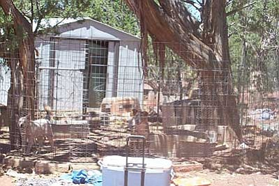 Courtesy<br>Animal Control found 18 dogs and six cats with no water on Ann Seymour's Seligman property, and more than 30 cats inside a nearby motor home with no food or water and litter boxes with feces running over the top, according to reports.