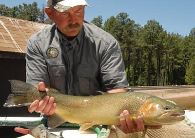 Fain lake gets boost of big fish for holiday the daily for Canyon lake az fishing