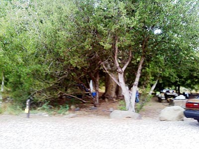 YCSO/Courtesy<br>Syler Newton's campsite and last known location. Tents are to the left the large tree.