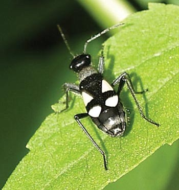 Courtesy photo<br> The largid is one of many insect stars of the Bug-a-Boo Bliss event at the Highlands Center Friday, Aug. 20.