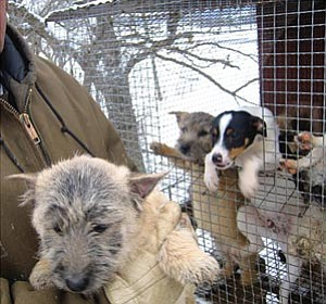 "Courtesy photo<br> At a puppy mill in Wisconsin, the ""breeder"" wears heavy coat and gloves against the January chill, while pups huddle on a wire mesh floor. ""The sight of puppies in cages, outdoors, may upset some people, but it's not against the law,"" a breeder told reporter Mike Jacobs. ""They were outside for a million years. It's only the last 200 that people have been putting 'em in the house."""