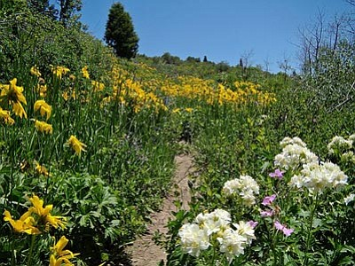 Courtesy photo<br>Preparing for wildflowers begins now.