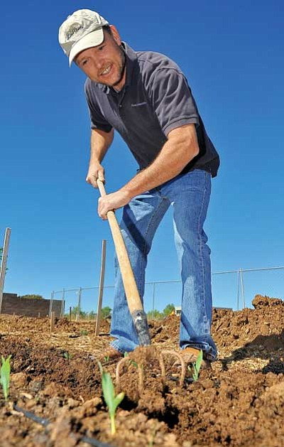 Matt Hinshaw/The Daily Courier<br> Mark Coné tends to his portion of a Prescott Valley community garden Saturday morning near Lake Valley Road.