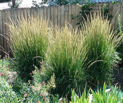 Courtesy photo<br>Group like plants in threes for increased landscape  drama.