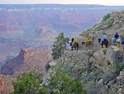 Mules heading into the canyon. Xanterra now offers mule rides along the rim. Submitted photo.