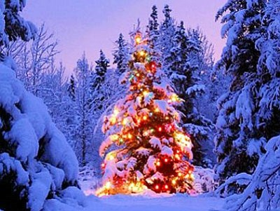 Kaibab National Forest starts Christmas season off by selling Christmas tree tags. Photo/WGCN