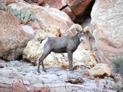 Wildlife encountered during one of Tom Martin's hikes in the Grand Canyon. Photo/Tom Martin