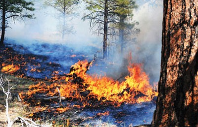 The Belknap Fire was one of several naturally-ignited fires that were managed to benefit ecosystem health in 2014. Photo/Kaibab National Forest Service