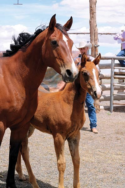 A mother shows off her colt during the sale. Loretta Yerian/WGCN