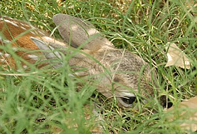 Arizona Game and Fish is warning the public that rescuing baby wildlife could be doing more harm than good. Photo/AZGF<br /><br /><!-- 1upcrlf2 -->