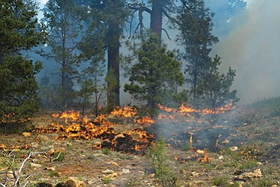 Flagstaff fire program praised by National Wildlife Federation for fire protections in Flagstaff watersheds. Photo/WGCN