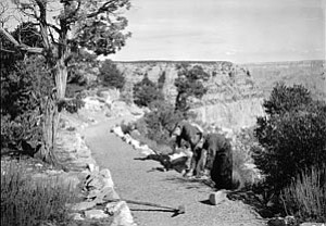 Members of a CCC crew work along the Rim Trail east of Verkamps.