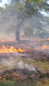 Prescribed fire.