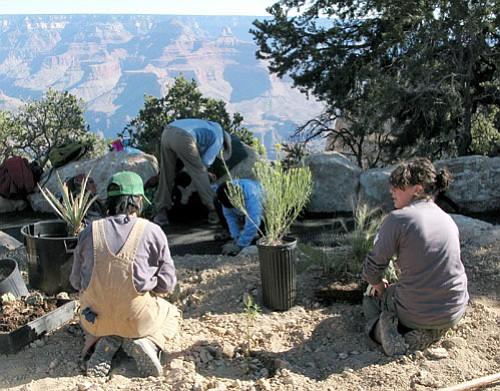 Members of the revegetation team work along Hermit Road./<i>NPS photo by Mike Quinn</i>