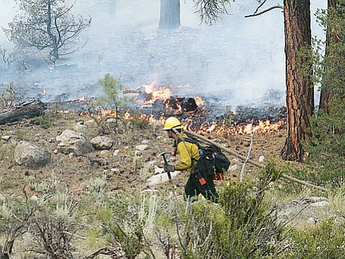 <br>Courtesy Kaibab National Forest<br> A crew member pulls a hose at the Miller Fire.
