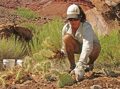 <br>Photo courtesy National Park Service<br> Volunteer Julie Clinton helps Grand Canyon with native vegetation restoration.