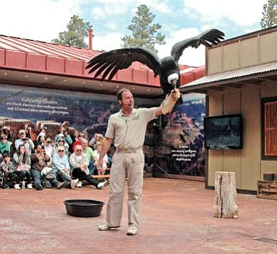 Photo/Joel Kramer<br> Joe Krathwohl, director of the World Center for Exotic Birds in Las Vegas, displays an Andean condor during a recent Condor Encounter bird show at the National Geographic Visitor Center and IMAX Theater in Tusayan.