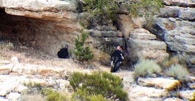 Submitted photo<br> A California condor stands at the edge of a nesting area deep in the grand canyon.The chick was confirmed visually on Sept. 9.