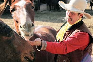 Ryan Williams/WGCN<br> Max Johnson, Xanterra Livery Barn manager at Grand Canyon National Park, feeds one of his mules a treat.