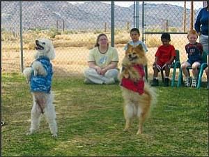Aussie, left, an 8-year-old male poodle, and Texas, a 6-year-old female Pomeranian, walk upright Thursday to the delight of children in the Western Arizona Council of Governments Kingman North Head Start program at Mohave Community College. The canines are handled by Bobbi the Clown and will entertain today through Sunday during performances by Circus Chimera at Burbank Street across from the Kingman branch of the Mohave County Library. TERRY ORGAN/Miner