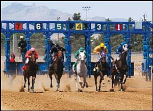 The Hualapai Downs took place this weekend and will continue next weekend. Here, Saturday's first race of the day takes off from the gate. From left to right are Sheezexotic (jockey Sherry Kirk), Dazzling Marjorie (Alejandro Ortega), Tapnmachine (Fernando Gamez), Regaletta (Daniel Gutierrez) and Wanted Man (Tyrone Gray). Not pictured is Persian Revenge (Steve Karr). Dazzling Marjorie won this race. JC AMBERLYN/Miner